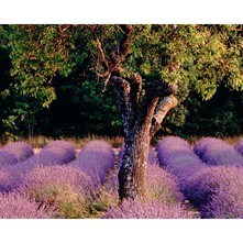 Provence, Bryan F. PETERSON - Poster