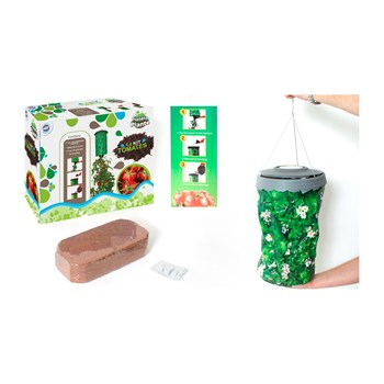MGM - Kit de plants de tomates - multicolore