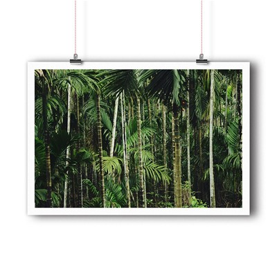 BALIBART Tropical Forest - Affiche d'art - vert