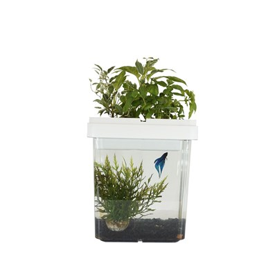 Citizenfarm Ozarium - aquarium potager - blanc