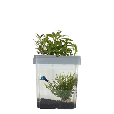 Citizenfarm Ozarium - aquarium potager - gris